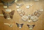 Hogle Zoo 74 - Moths