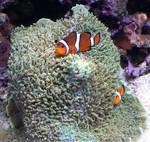 Aquarium 128
