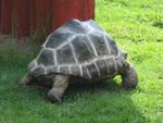 Tautphaus Zoo 25 Tortoise