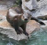 Tautphaus Zoo 27 Otter