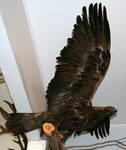 MoA Museum 173 Eagle
