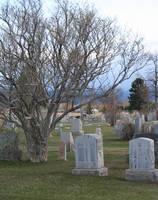 Forestvale Cemetery 4 by Falln-Stock