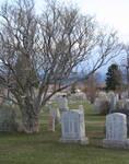 Forestvale Cemetery 4