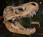 Museum Rockies 89