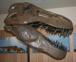 TRex Museum 1