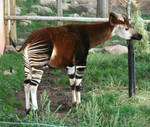 Cheyenne Mtn Zoo 30 by Falln-Stock