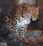 Denver Zoo 41 Leopard
