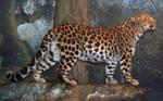 Denver Zoo 57 Leopard