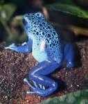 Denver Zoo 78 Frog
