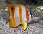 Denver Zoo 101 Fish