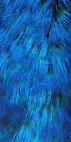 Denver Zoo 149 Peacock