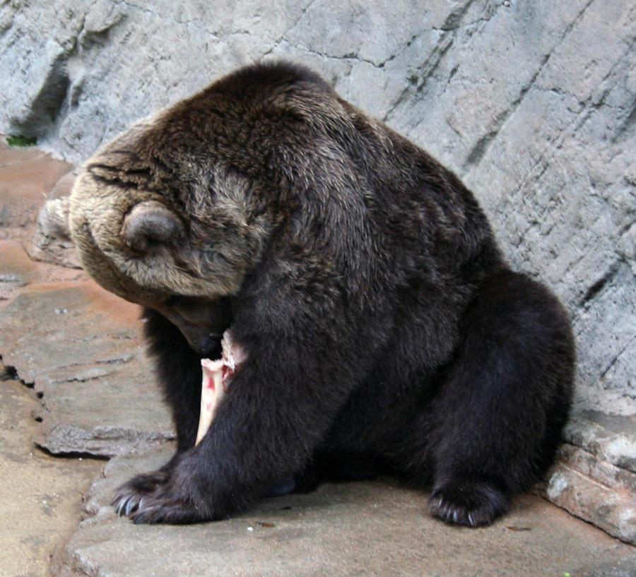 Denver Zoo Free Days: Denver Zoo 224 Bear By Falln-Stock On DeviantArt