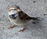 Denver Zoo 300 Bird