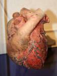 Denver Museum Anatomy Heart 236