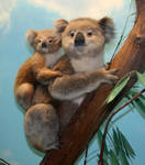 Denver Museum Koala Bear 367