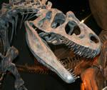 Denver Museum Prehistoric 528
