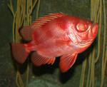 Denver Aquarium 20