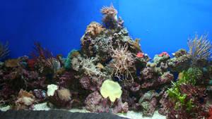 Denver Aquarium 24