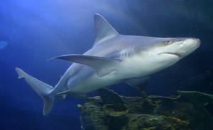 Denver Aquarium Shark 60 by Falln-Stock