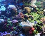Denver Aquarium 78