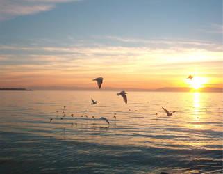 Ocean Birds by Falln-Stock