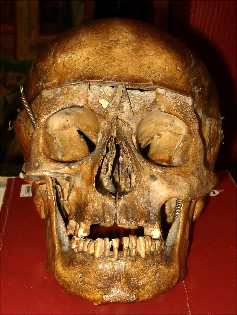 Human Skull 1 by Falln-Stock