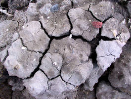 Cracked Mud 13 by Falln-Stock