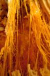 Pumpkin Guts Macro 6