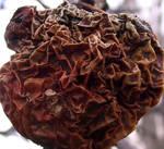 Rotten Apple Texture 2