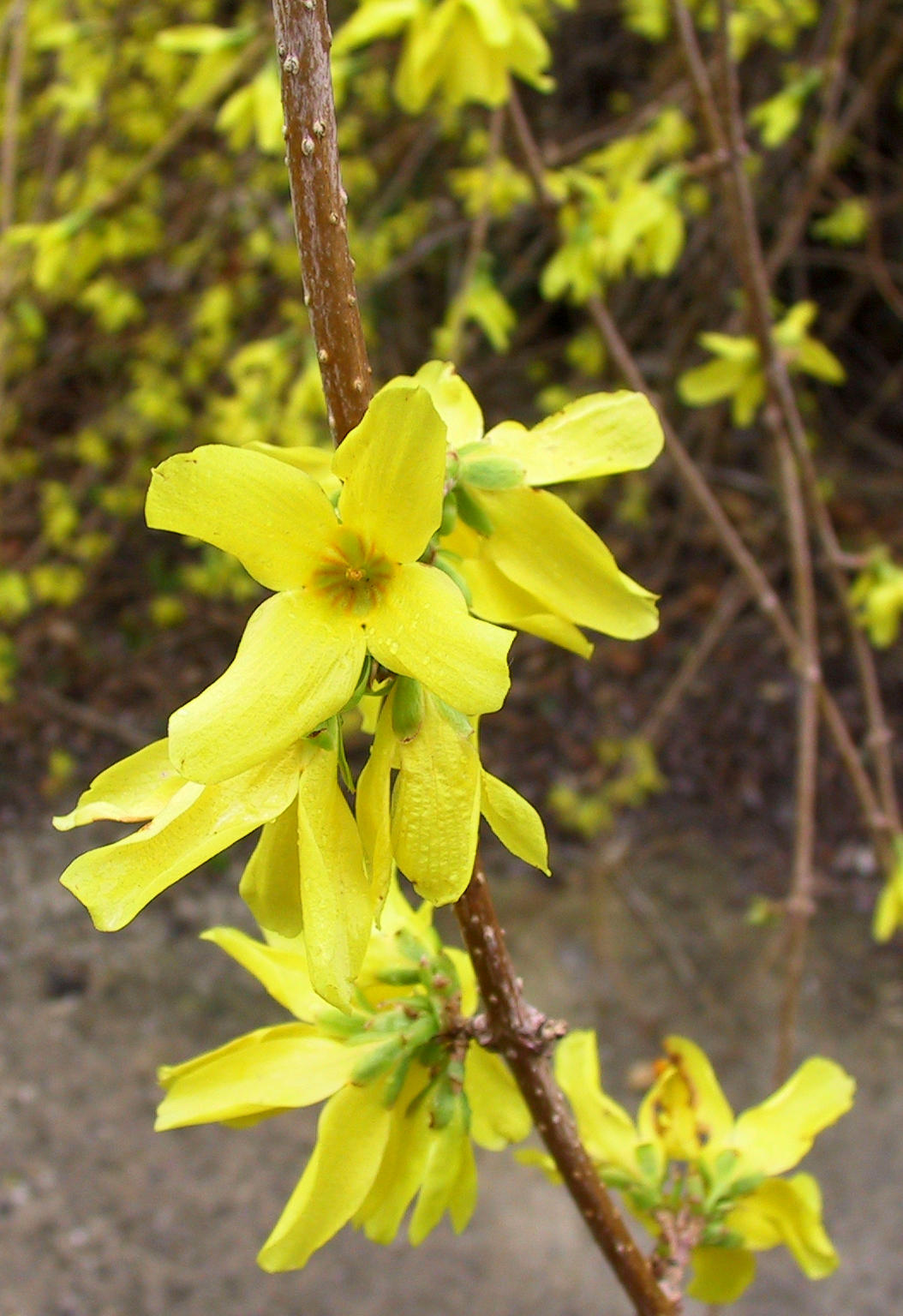 Yellow vine flowers by falln stock on deviantart yellow vine flowers by falln stock mightylinksfo