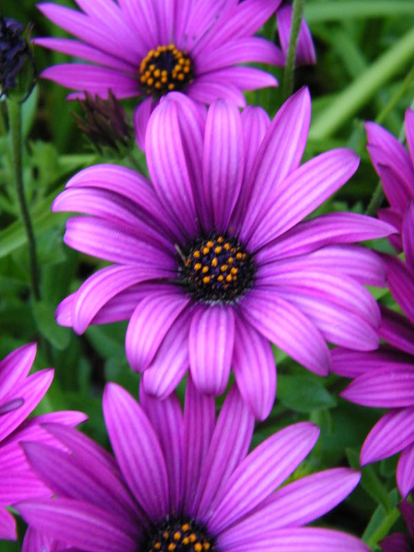 purple flowers up close by darkangel on deviantart, Beautiful flower
