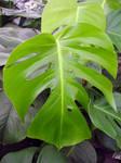 Highlighted Tropical Leaf