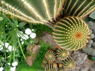 Perspective Cactus by paploothelearned
