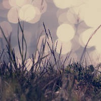 in the grass by Linlith