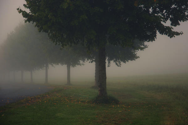 Morning Mist by Linlith