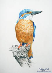 Kingfisher by Happy5art