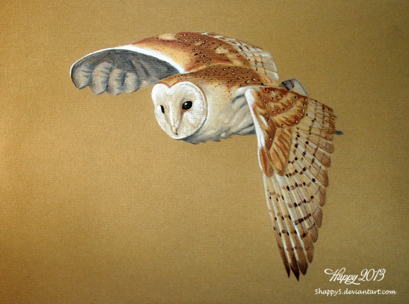Barn Owl Beauty by 5Happy5