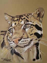 Clouded Leopard Portrait