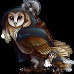 Barn Owl SCC