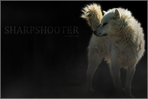 ^ Twilightstars ^ Wolves The_White_Wolf__Revisited_by_Kazini