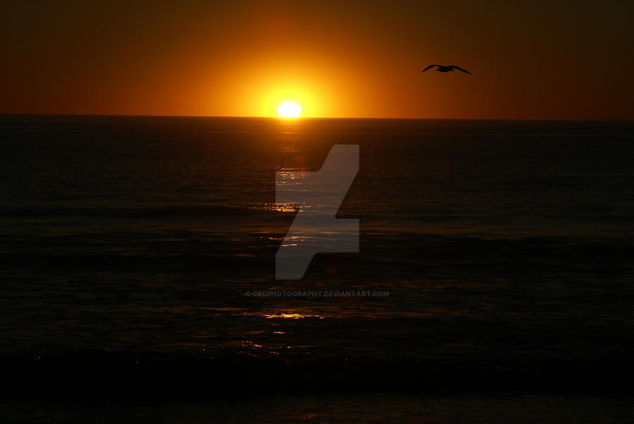 Last Flight Of Day by cecphotography