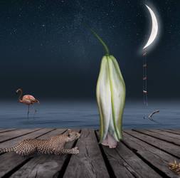 midnight swim by davidrabin
