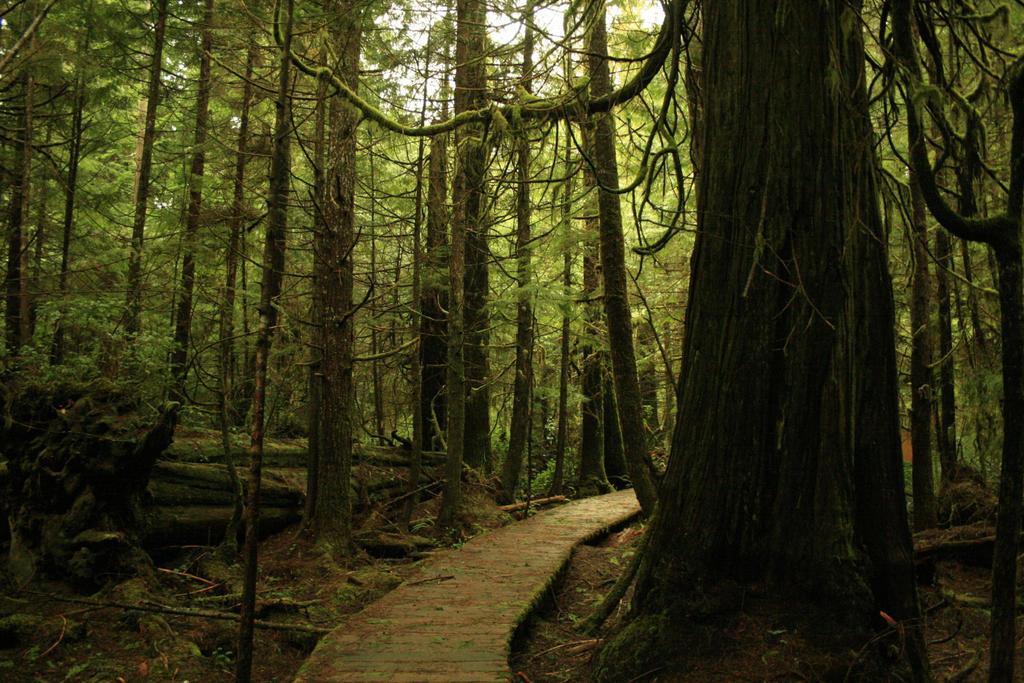 Rainforest Stock by StellarMage-Stock