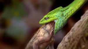 Snake Eat study