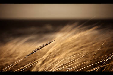 Grass 300 by silverdragon
