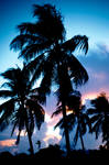 Palms and a sunset