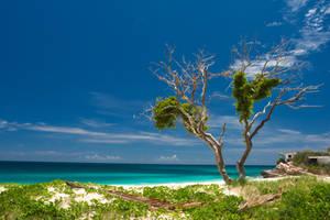 Caribbean Blue by silverdragon