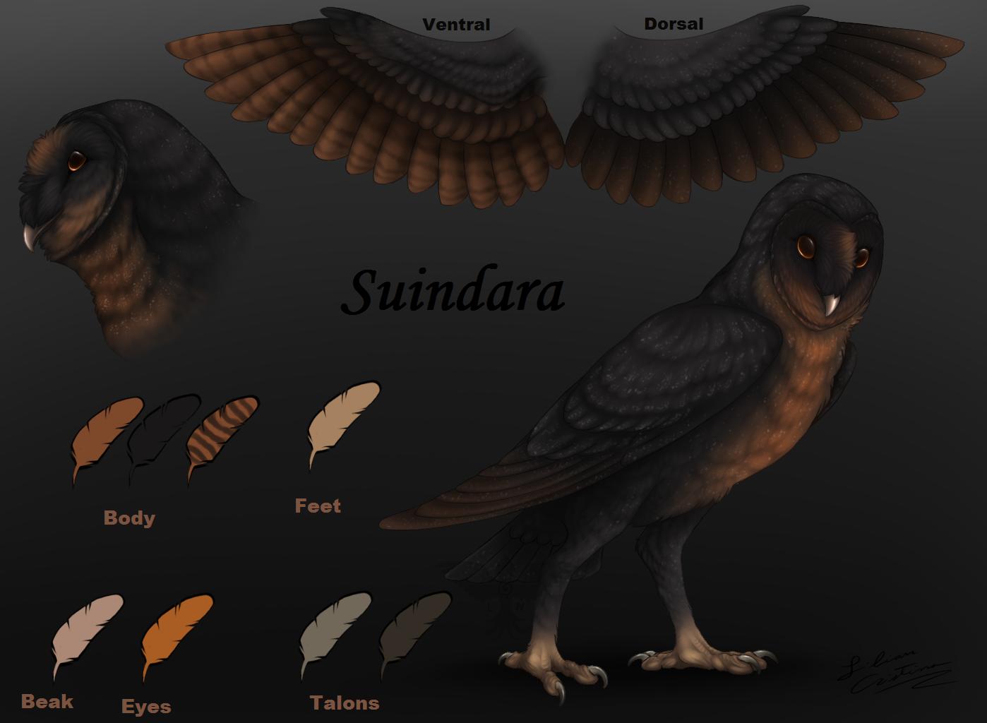 Suindara Ref. Sheet by Night-Anders