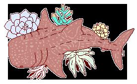 whale succulent shark