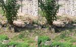 3D Sleeping Lions